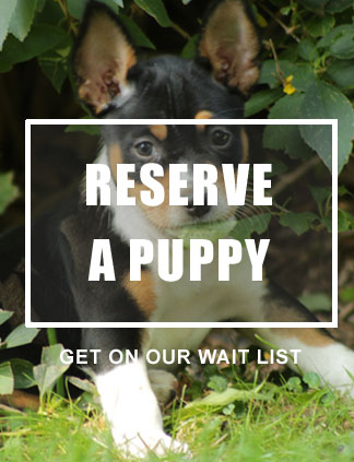 Reserve A Puppy